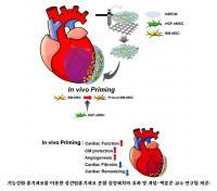 서울성모병원,심장 살리는 바이오잉크 심장패치 개발